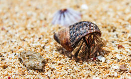 Créature de plage Photos libres de droits