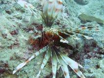 Créature marine Image stock