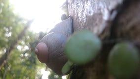 Créature naturelle au Sri Lanka photos stock