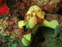 Créature sous-marine Photos libres de droits