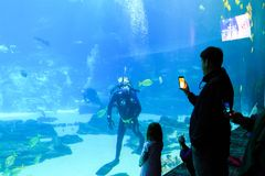 Créatures de mer à l'aquarium Etats-Unis de la Géorgie avec des plongeurs autonomes dans le réservoir Photo stock