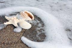 Créatures de mer Images libres de droits
