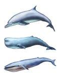 Créatures de mer illustration stock