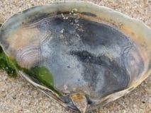 Créatures de mer d'océan Photo stock