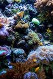 Créatures de mer dans un jardin d'océan Photos libres de droits