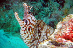 Créatures mortelles de mer Images libres de droits