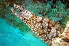 Créatures mortelles de mer Photos stock