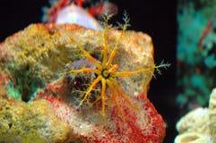 Créatures mortelles de mer Photo stock