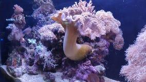 Créatures roses de mer Photo libre de droits