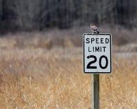 Crécerelle américaine se reposant sur un panneau routier dans un domaine images stock