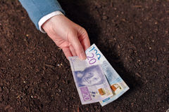 Crédito bancario en la moneda sueca para el inicio y el debel del negocio agrícola Imagen de archivo libre de regalías