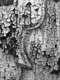 Crémona Italia, final que se agrieta de la puerta de madera del renacimiento Foto de archivo libre de regalías