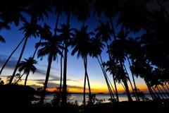 Crépuscule avec l'arbre de noix de coco Photo libre de droits
