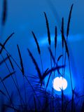Crépuscule bleu Photo stock