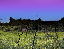 Crépuscule bleu et jaune photo libre de droits