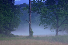 Crépuscule dans la crique Photo libre de droits