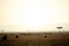 Crépuscule dans le masai Mara Photographie stock libre de droits