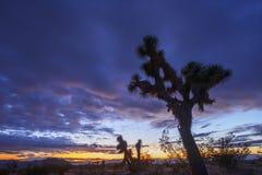 Crépuscule de désert Photos stock
