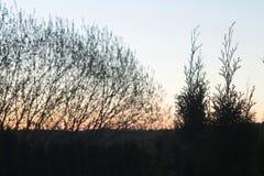Crépuscule de matin dans les banlieues images libres de droits