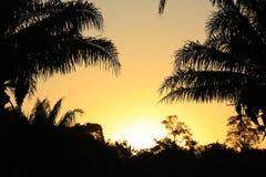 Crépuscule de Pantanal photo libre de droits