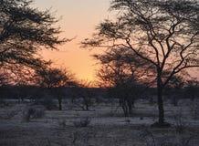 Crépuscule en Namibie Photos libres de droits