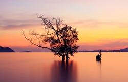 Crépuscule et arbre de silhouettes Photos libres de droits