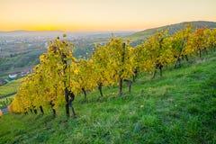 Crépuscule le soir dans un vignoble en automne Photos stock