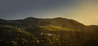 Crépuscule sur les pentes du vallet de Douro, Portugal photo stock