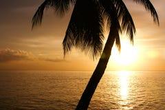 Crépuscule tropical Photo stock
