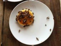 Crêpe d'abeille de miel Image stock