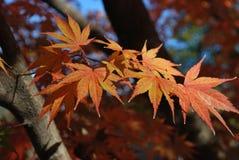 Crête d'automne Photos stock