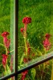 Crête par la fenêtre Photo libre de droits