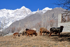 Crêtes célèbres de Karakoram Images stock