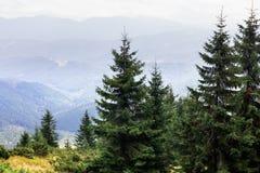 Crêtes de montagne, forêt conifére et pré vert Photographie stock