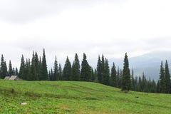 Crêtes de montagne, forêt conifére et pré vert Image stock