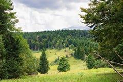 Crêtes de montagne, forêt conifére et pré vert Photo stock