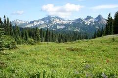 Crêtes de montagnes de neige sur le champ avec des fleurs en fleur Photo libre de droits