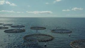 Cría de la jaula de la acuicultura de pescados de agua dulce metrajes
