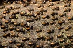 Cría de la termita del trabajador en corteza de árbol imágenes de archivo libres de regalías