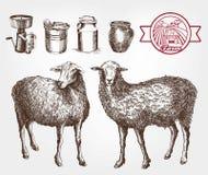 Cría de las ovejas stock de ilustración