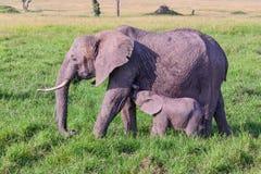 Cría del bebé del elefante africano de la madre Imágenes de archivo libres de regalías