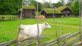 cría del ganado de la cría de animales, pueblo norwagian, tejado de la hierba verde, Noruega metrajes