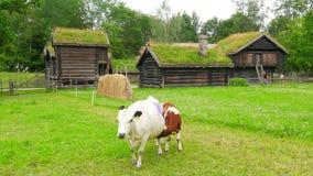 cría del ganado de la cría de animales, pueblo norwagian, tejado de la hierba verde, Noruega almacen de metraje de vídeo