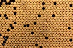 Crías de las abejas en la colmena Textura del fondo Foto de archivo libre de regalías