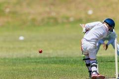 Críquete Fielder Batsman Action Fotos de Stock