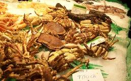 crab льдед Стоковое Фото