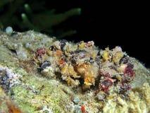 crab спайдер Стоковые Фотографии RF