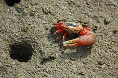 Free Crab Stock Photos - 10961973