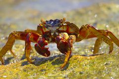 Crab. On the coast stock image