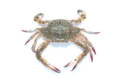 Crab. Flower crab from wet market Stock Photo
